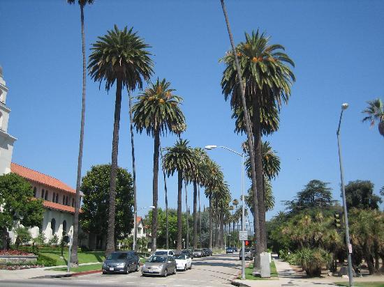 Hilton Garden Inn LAX/El Segundo: Palm Trees Of Beverly Hills