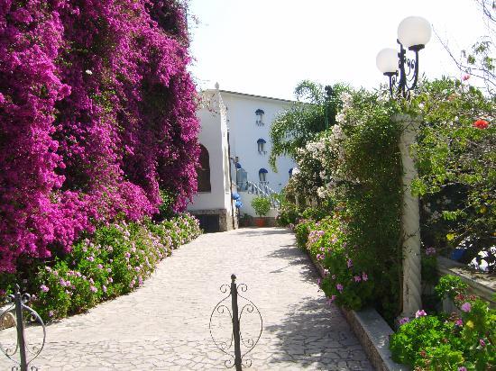 Sant Alphio Garden Hotel & Spa: Borganvillea over hotel