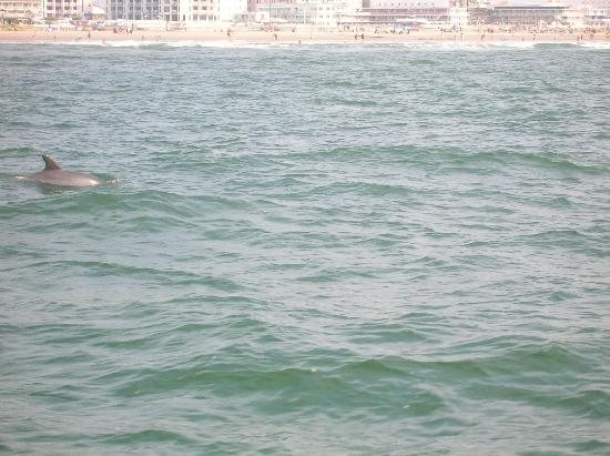 Silver Bullet Tours: Dolphin sightings-pictures don't compare to the experience