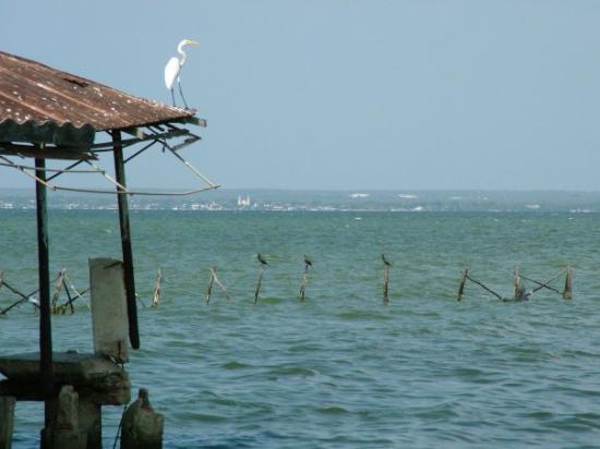 Palafitos - lake maracaibo
