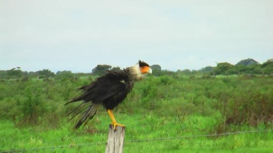 Barinas, เวเนซุเอลา: Eagle