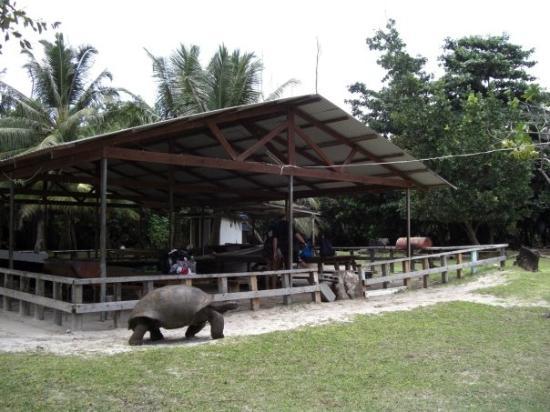 Curieuse Island: Inselparadies für Riesen
