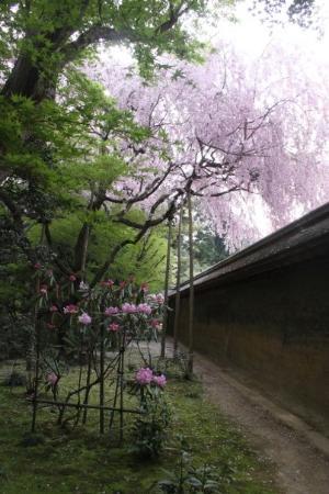 Derri re le mur du jardin zen picture of kyoto kyoto for Jardin kyoto