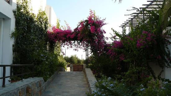 Hersonissos Maris Hotel and Suites: Hotel courtyard 2