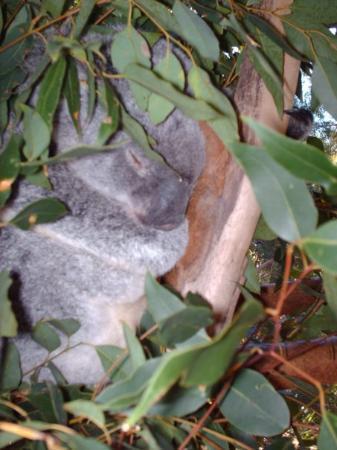 Bundaberg, Australia: Chut ...