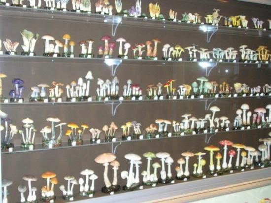 Nova Scotia Museum of Natural History: Lorenzen Mushrooms. I think that is how it is spelled. Anyway. They were made by a Nova Scotian