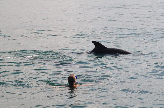 Wildlife Connection: In the water with the dolphins!