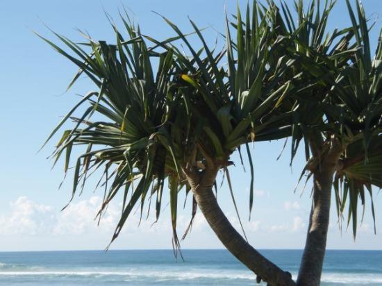 Lennox Head Beach: Lennox Head.