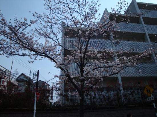Ota, Japan: Nishi-Magome on 2009, April 5th