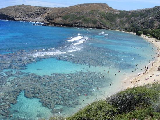Sheraton Waikiki Hanauma Bay Snorkeling