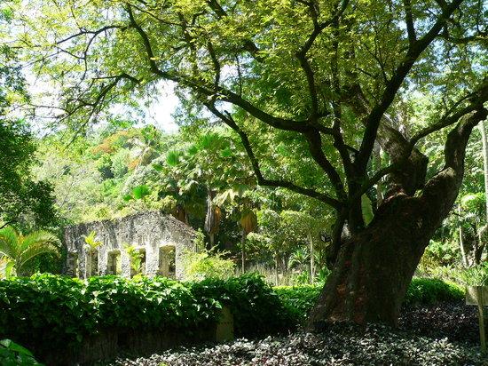 Jardín Balata: Anse Latouche
