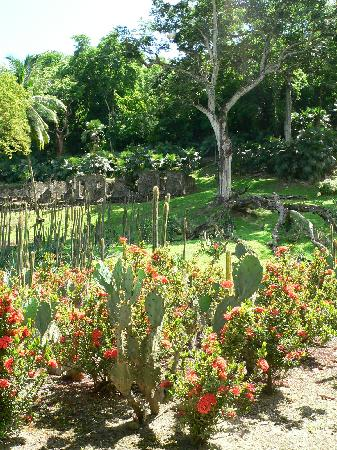 Jardin de Balata : Anse Latouche - cactus