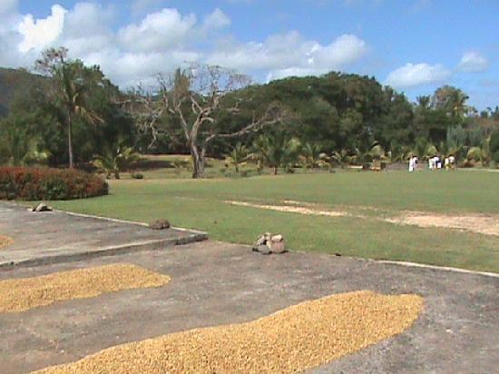 Merville Beach Hotel: Coffee factory grounds