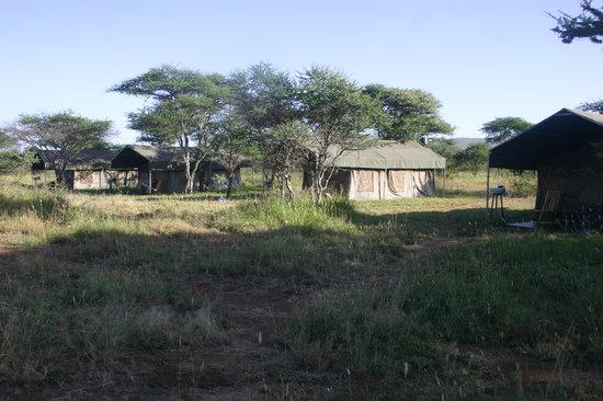Serengeti Wild Camp: Accommodation tents