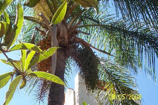 Villa de las Sonrisas B&B: Palm Tree over pool and gardens