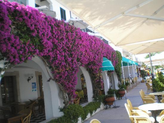 Mar Senses Puerto de Pollença: Mum's Flowers at Hotel along front