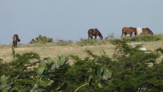 Hector's by the Sea: Hector's-by-the-Sea Horses