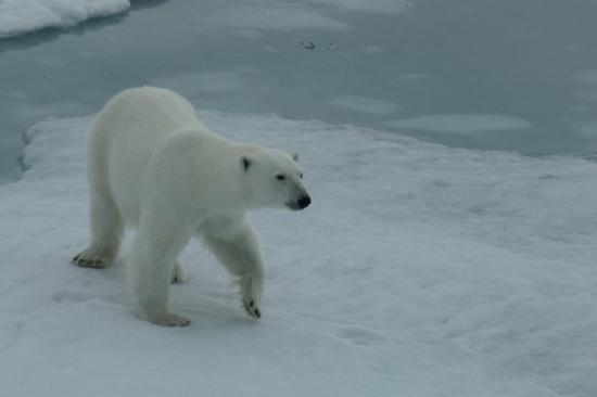 Longyearbyen Photo