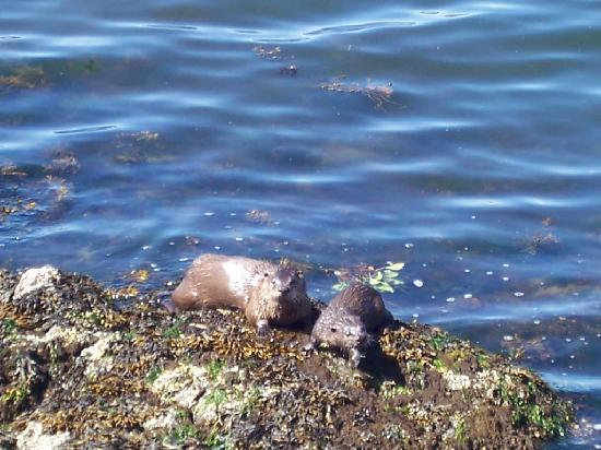 A Downtown Victoria Bed and Breakfast: Otters, Victoria, near Ocean View B&B