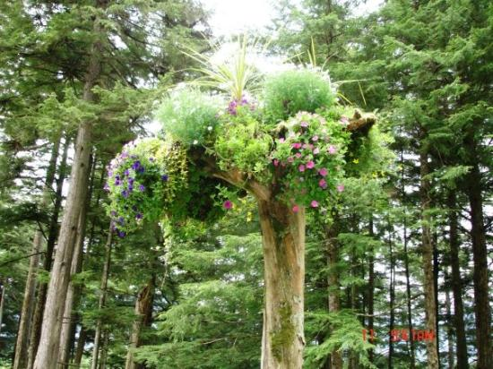 Juneau, AK: This is a tree turned upside down and stuck into the ground with flowers growing out of them. I`