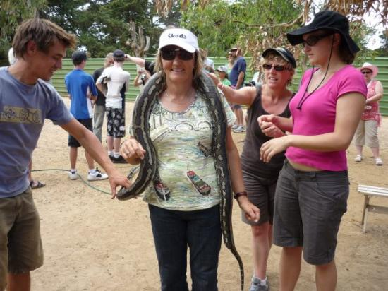 Paul's Place Wildlife Sanctuary: Mum holding a snake....ewww