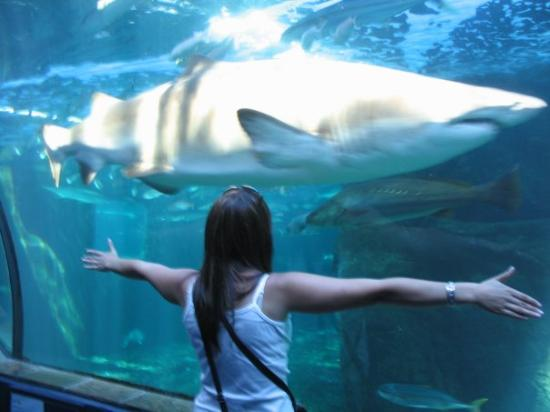 Two Oceans Aquarium: Cape Town