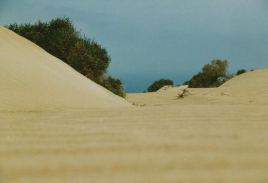 Fuerteventura, Espagne : Blickwinkel einer Ameise.
