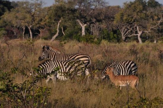 Landscape - Picture of Pom Pom Camp, Okavango Delta - Tripadvisor