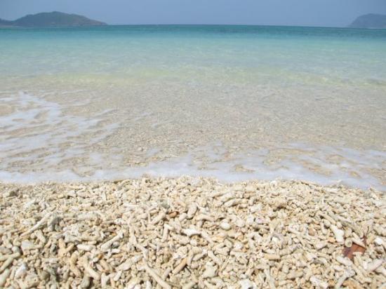 Iriomote Island. - Picture of Taketomicho Iriomote-jima, Yaeyama-gun - TripAd...
