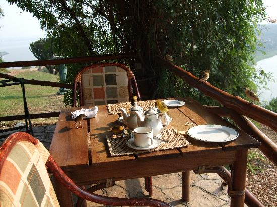 Mweya Safari Lodge: birds raid the table at the restaurant terrace