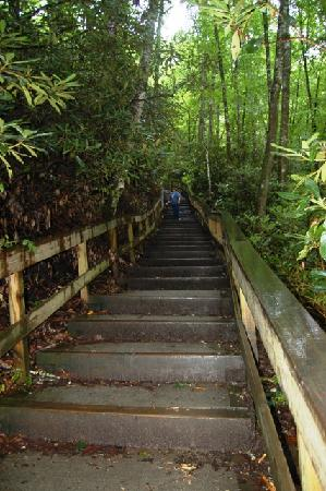 The staircase to Mingo Falls begins at the parking lot.