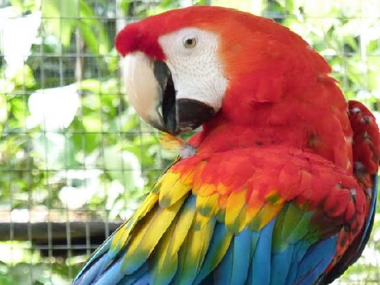 Hosteria Hakuna Matata : Parrot seen on a trip from Hakuna Matata
