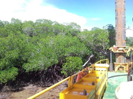 Port Moresby, Papua New Guinea: Sideson 4 close to the Mangroves