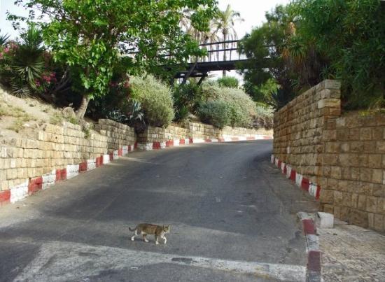 "Saint Peter Church : ""Wishing Bridge,"" Jaffa"