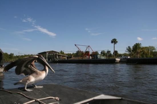 Captain Jack's Airboat Tours Photo