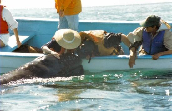 Laguna San Ignacio: The baby whales would come right up to the boat to see us.