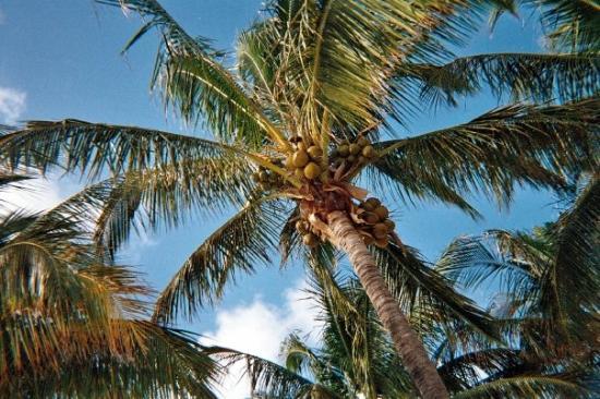 Flights From West Palm Beach To Grand Bahama Island