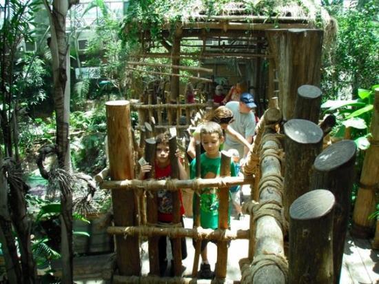 Audubon Zoo: Los que se portaron mal...