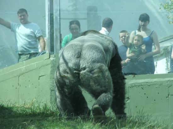 in dublin zoo 2005
