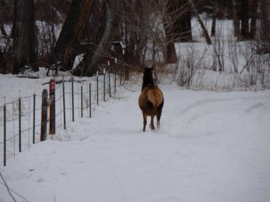 Elk Butt  - Foto Van Salmon  Idaho
