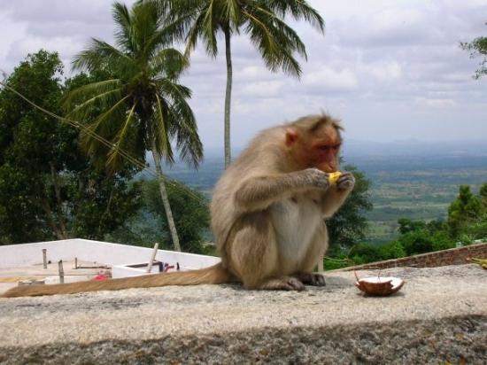 Mysuru (Mysore) Photo