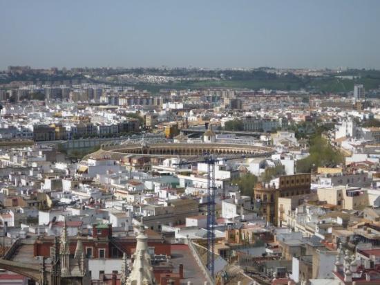 Sevilla picture of seville province of seville - Garden center sevilla ...