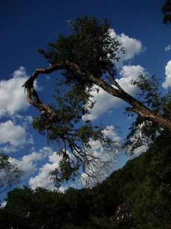Capiovi, Argentina: Rain Forest, Tabay Falls, Jardin America, Misiones, Argentina