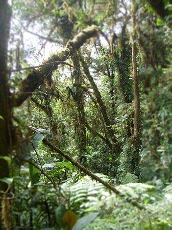 Monteverde Foto