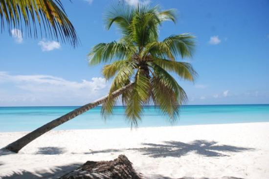 Punta Cana Photo