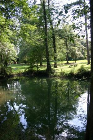 Florida Caverns State Park: Its an almost perfect reflection.