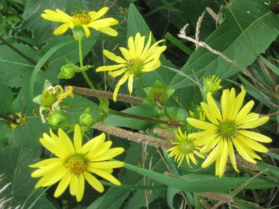 White Pines Inn: Wild Flowers