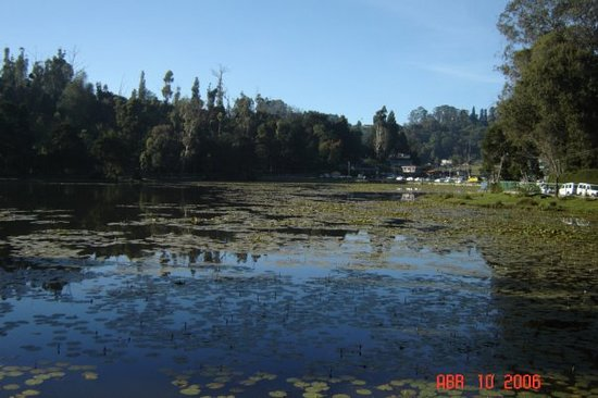 Berijam lake kodaikanal 2018 what to know before you go 720 reviews and counting tripadvisor for Resorts in kodaikanal with swimming pool