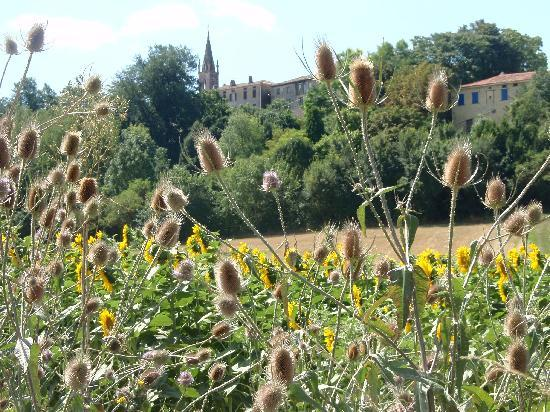 Domaine La Castagne : Montmaur above the sunflowers