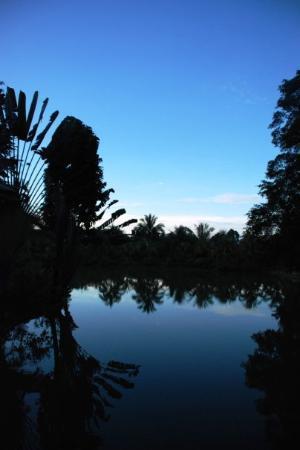Sandakan, Malaysia: Sad Lake(mile14)